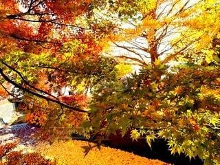川に落ちた紅葉した楓の写真・画像素材[4618747]