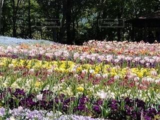 色とりどりの花壇の写真・画像素材[4606378]