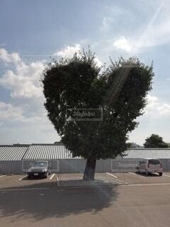 幸せなハートの木の写真・画像素材[4608433]