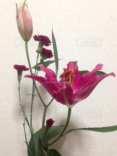 花の写真・画像素材[337963]