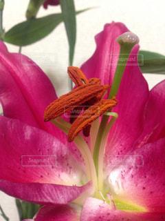 花の写真・画像素材[337965]