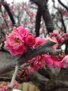 春の写真・画像素材[337968]