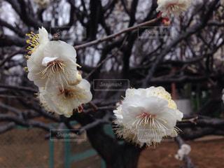 花の写真・画像素材[337978]