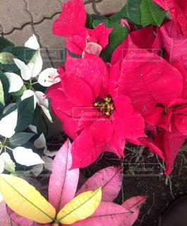 花の写真・画像素材[337987]