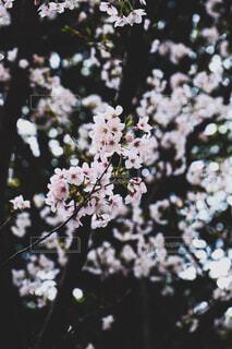 花びよりの写真・画像素材[4617673]