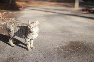 猫の写真・画像素材[4722329]