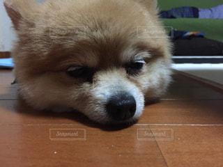 犬 - No.204641