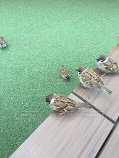 地面に横たわる鳥の写真・画像素材[4618080]
