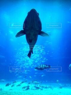 愉快な魚たちの写真・画像素材[4623836]