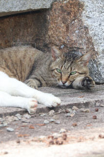 石造りの建物の上に横たわっている猫の写真・画像素材[4626265]