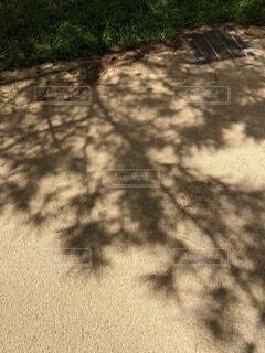木の影の写真・画像素材[4632489]