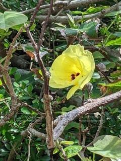 黄色い花の写真・画像素材[4632791]