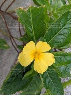 黄色い花の写真・画像素材[4741881]