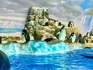 ペンギンの写真・画像素材[4724758]