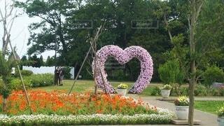 花のハートトピアリーの写真・画像素材[4627378]
