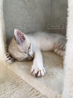 眠り猫の写真・画像素材[4686178]