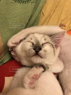 眠り猫の写真・画像素材[4698391]