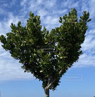 ハートの木の写真・画像素材[4624212]