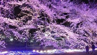 紫色の花のグループの写真・画像素材[4630157]