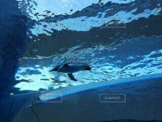 泳ぐの写真・画像素材[4630284]