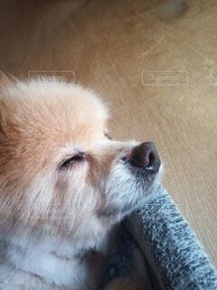 ベッドでおやすみ中の犬の写真・画像素材[4630707]
