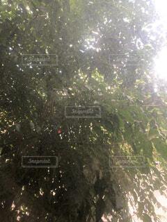 木の隣に立っている人々のグループの写真・画像素材[4653392]