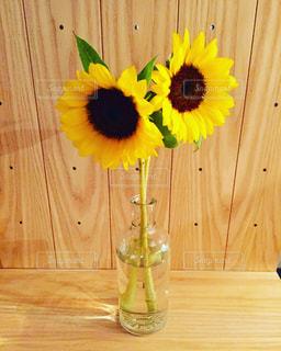 花の写真・画像素材[206437]