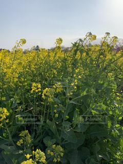 緑の葉の黄色い花の写真・画像素材[2113440]