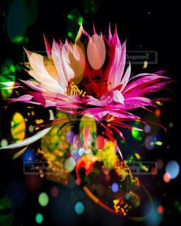 サボテンの花の写真・画像素材[4656847]