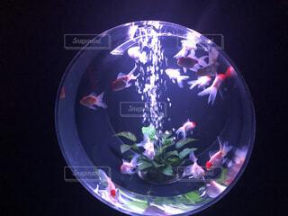 光る金魚アートの写真・画像素材[4632638]