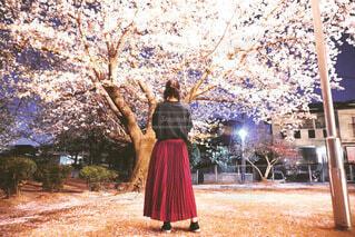 家の近くの桜が一番の穴場。の写真・画像素材[4633817]