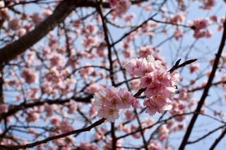 春 - No.394209