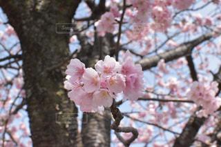 春 - No.394210