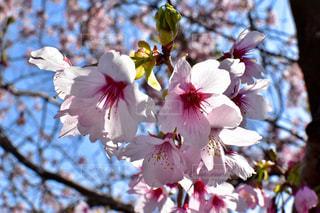春 - No.394229