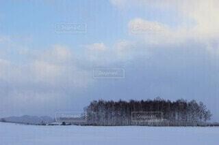 防風林と雪景色の畑の写真・画像素材[4635248]