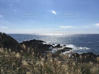 ススキが風になびく海岸の写真・画像素材[4635326]