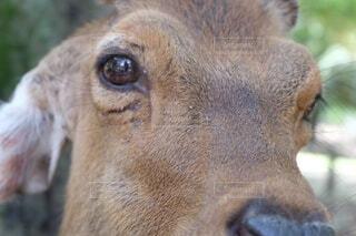 カメラを見ている動物のクローズアップの写真・画像素材[4635459]