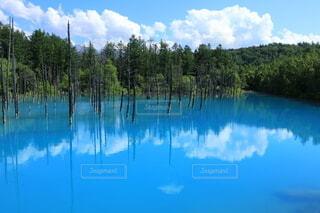 青い池の写真・画像素材[4636496]