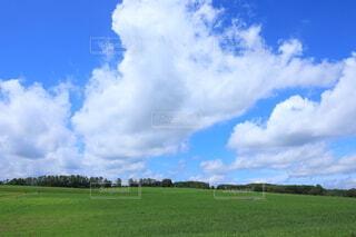 緑の原っぱと夏の雲の写真・画像素材[4639025]