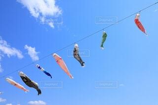 鯉のぼり 札幌市清田区の写真・画像素材[4648634]