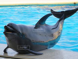 イルカの写真・画像素材[206868]