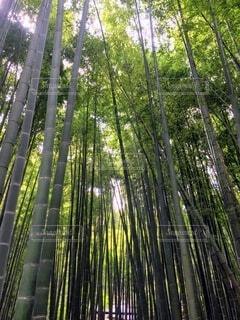 森の中の木の写真・画像素材[4654931]