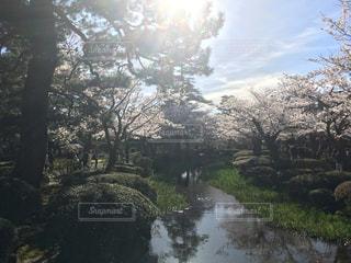 晴天の兼六園の写真・画像素材[1203458]