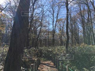 戸隠の森の写真・画像素材[1206409]