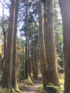戸隠の森 - No.1206411