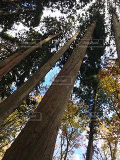 戸隠の森の写真・画像素材[1206414]