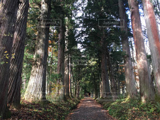 戸隠の森の写真・画像素材[1206417]