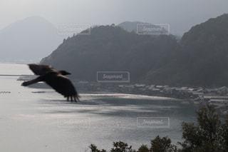 水の上を飛んでいる鳥の写真・画像素材[1214594]