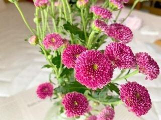 花のクローズアップの写真・画像素材[4769448]
