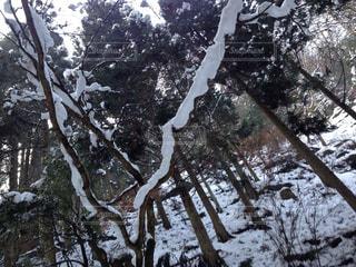 森林の写真・画像素材[206345]